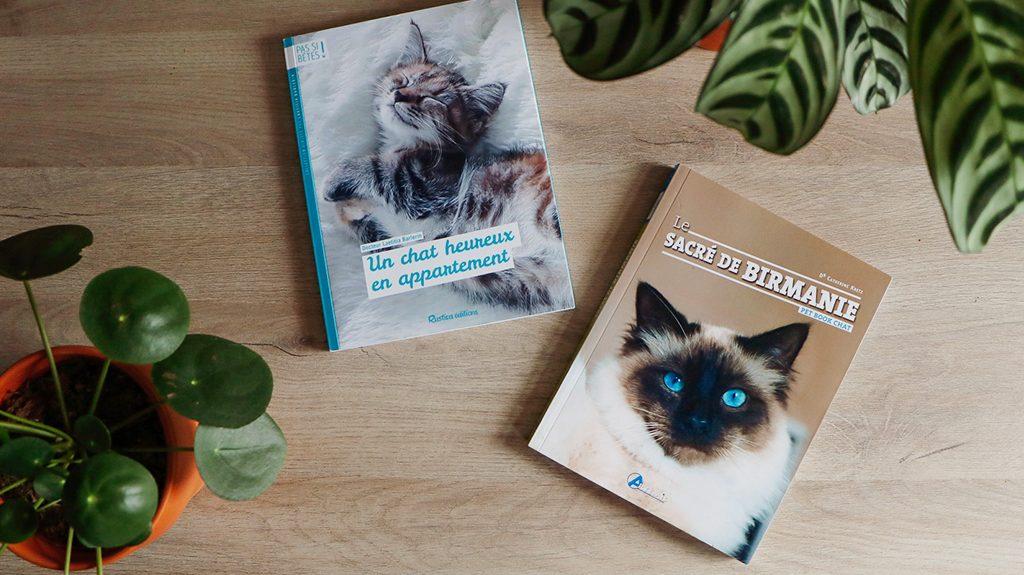 livre-chat-en-appartement-bein-préparer-l'arrivée-de-son-chat