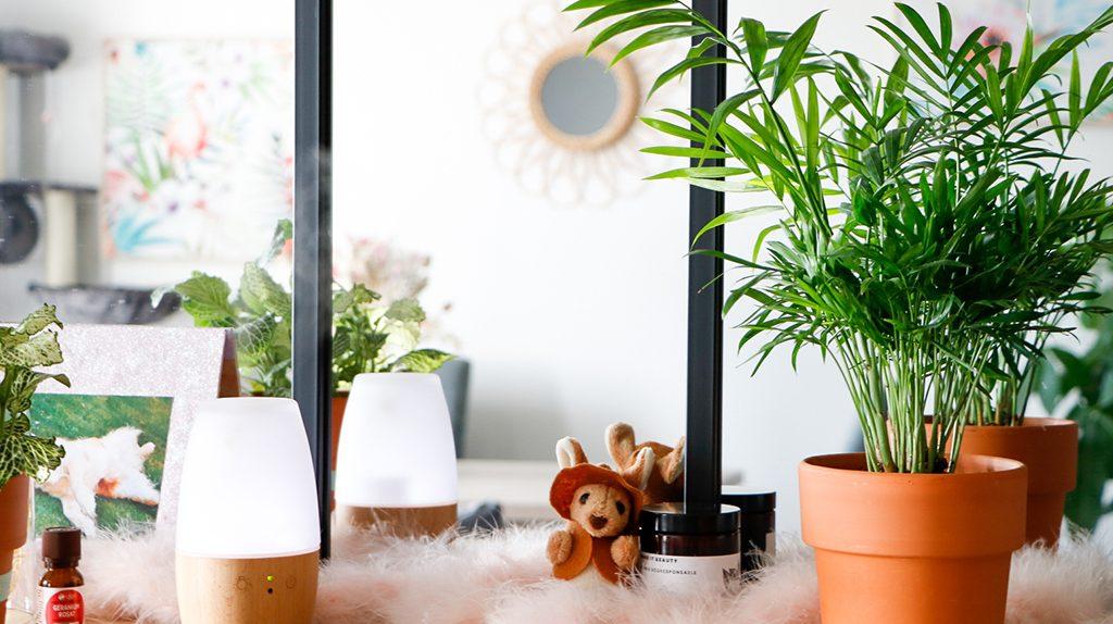 plantes-interieures-diffuseur-huile-essentielles